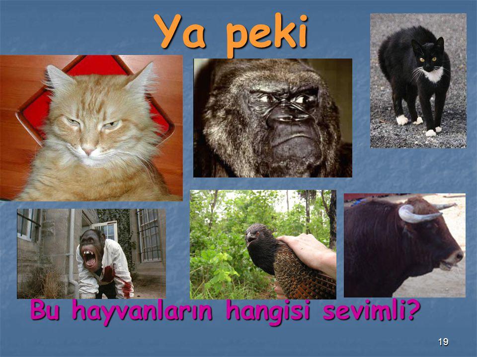 Ya peki Bu hayvanların hangisi sevimli