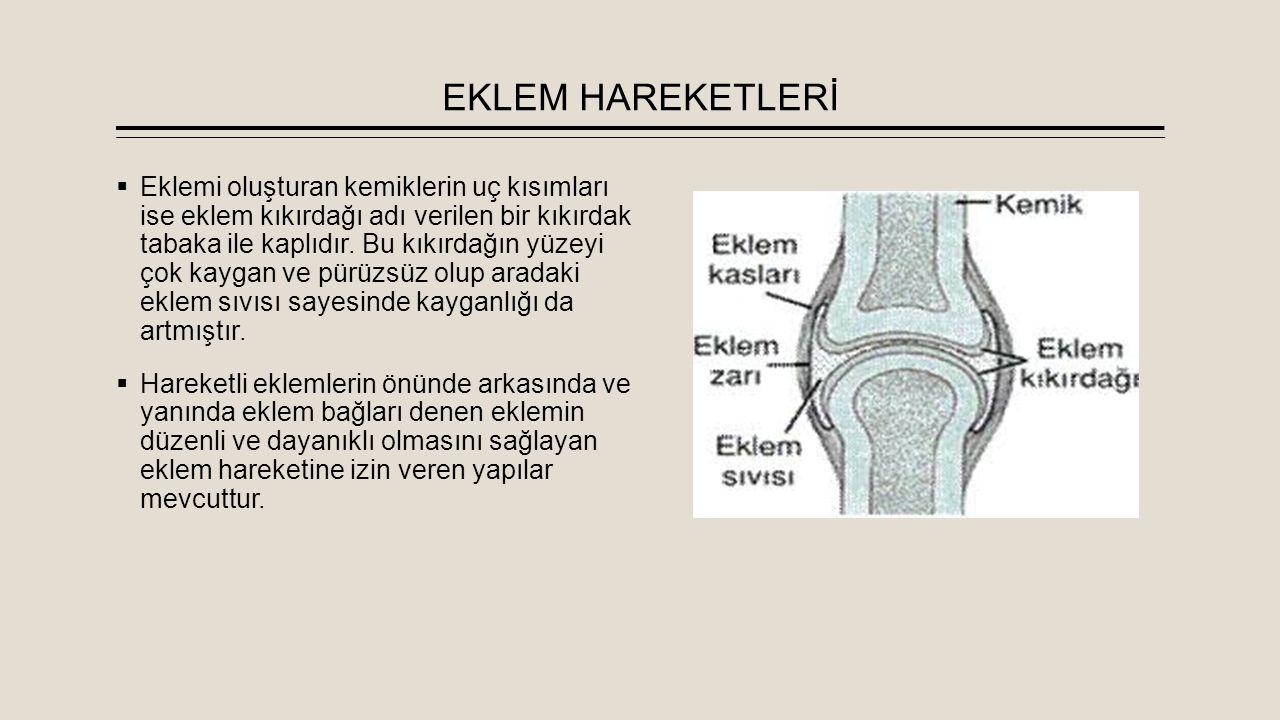 EKLEM HAREKETLERİ