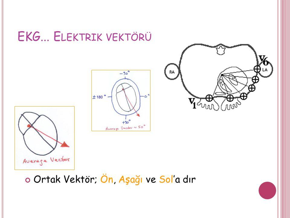 EKG... Elektrik vektörü Ortak Vektör; Ön, Aşağı ve Sol'a dır