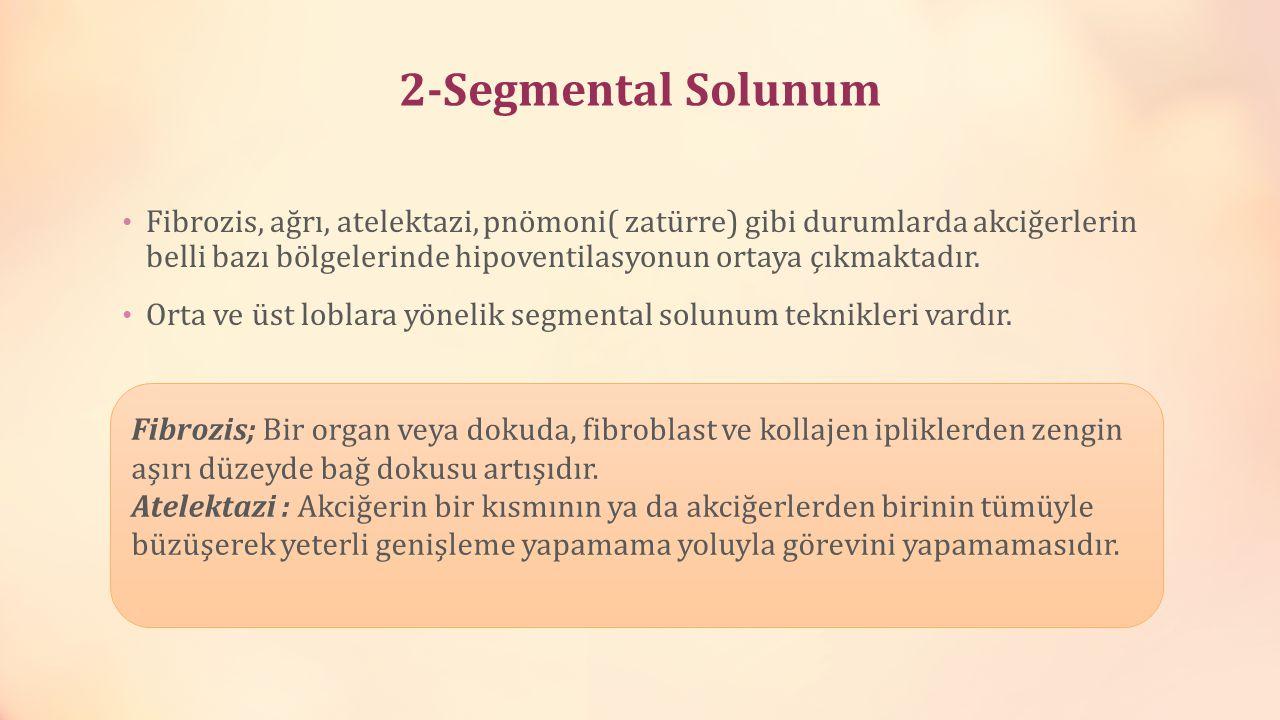 2-Segmental Solunum