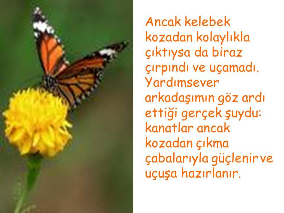 Ancak kelebek kozadan kolaylıkla çıktıysa da biraz çırpındı ve uçamadı