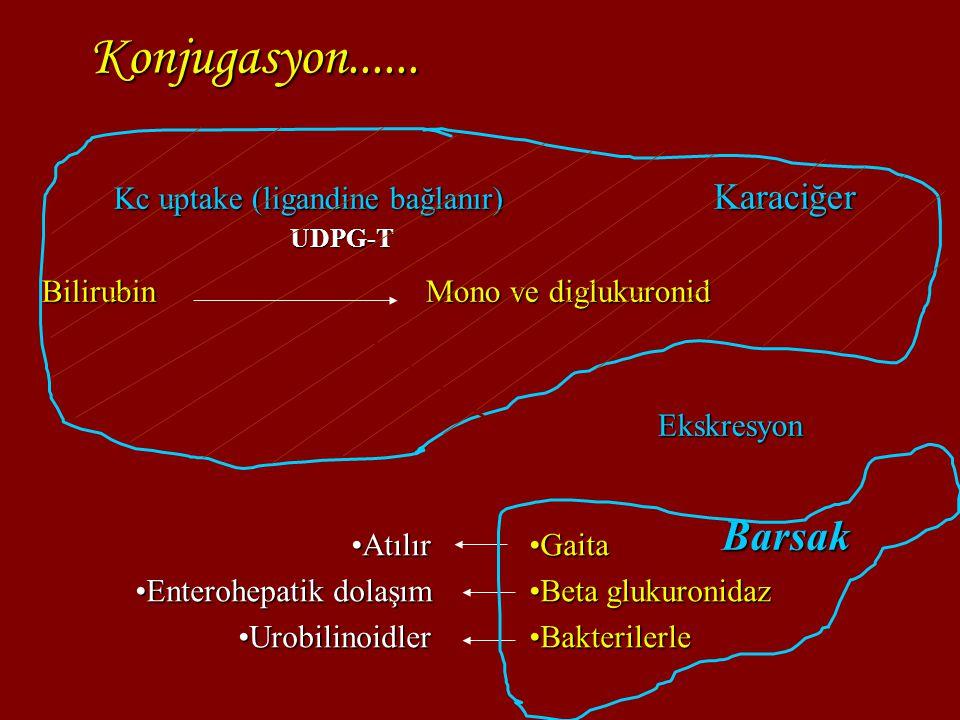 Konjugasyon...... Barsak Kc uptake (ligandine bağlanır) Karaciğer