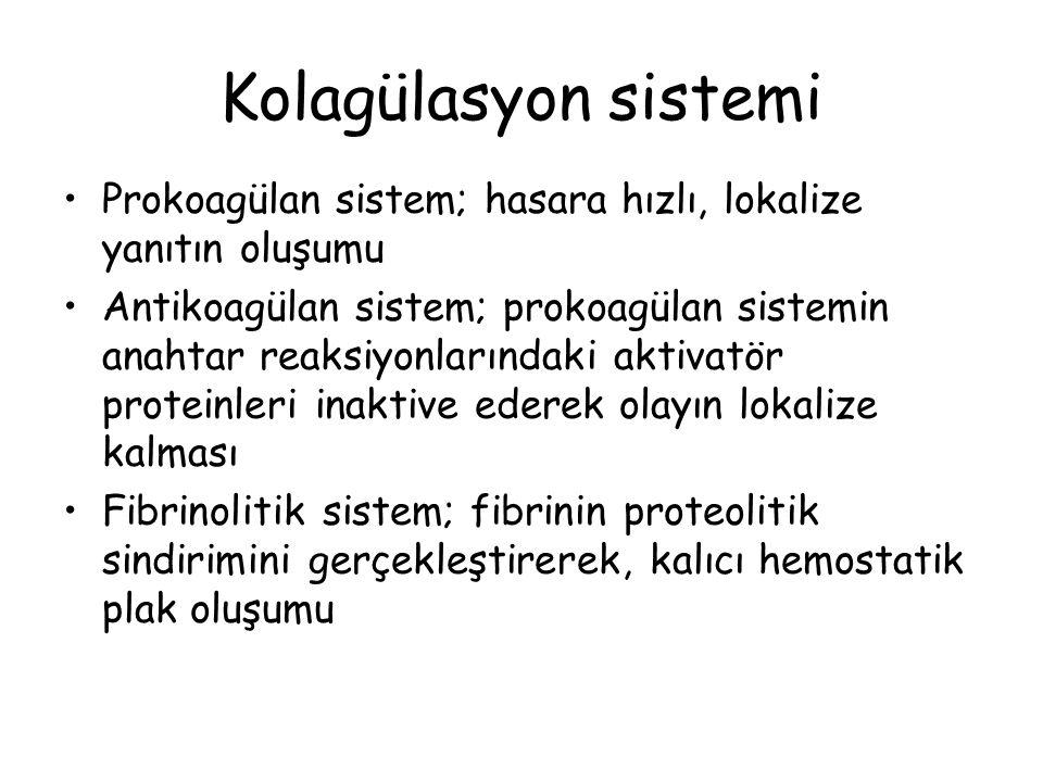 Kolagülasyon sistemi Prokoagülan sistem; hasara hızlı, lokalize yanıtın oluşumu.