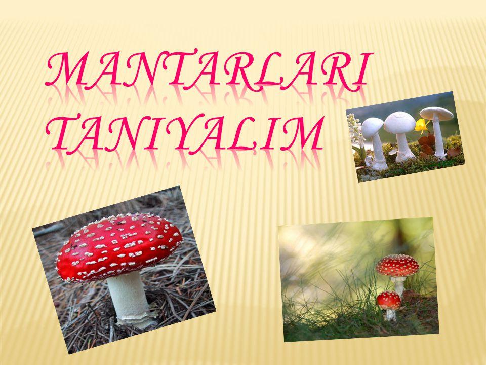 MANTARLARI TANIYALIM
