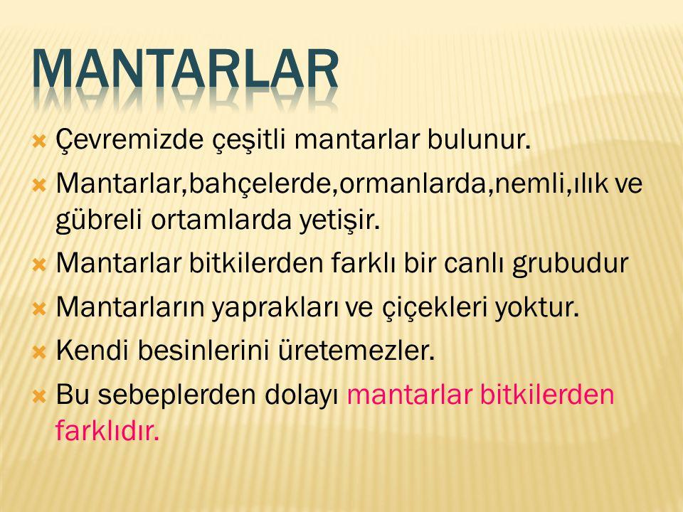 MANTARLAR Çevremizde çeşitli mantarlar bulunur.