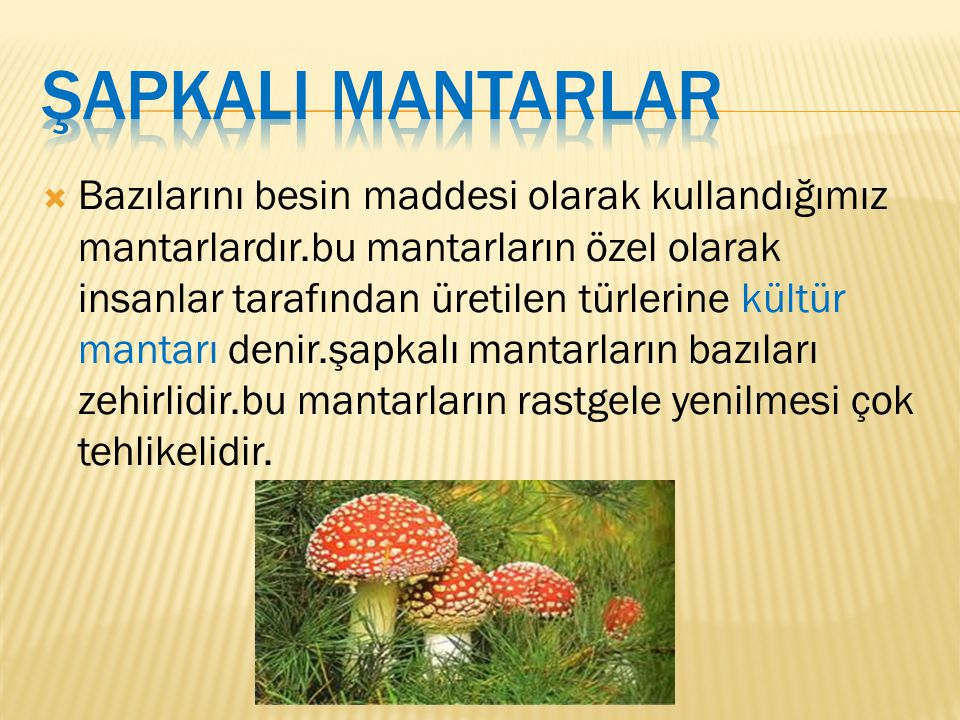ŞAPKALI MANTARLAR