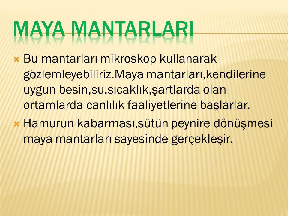 MAYA MANTARLARI