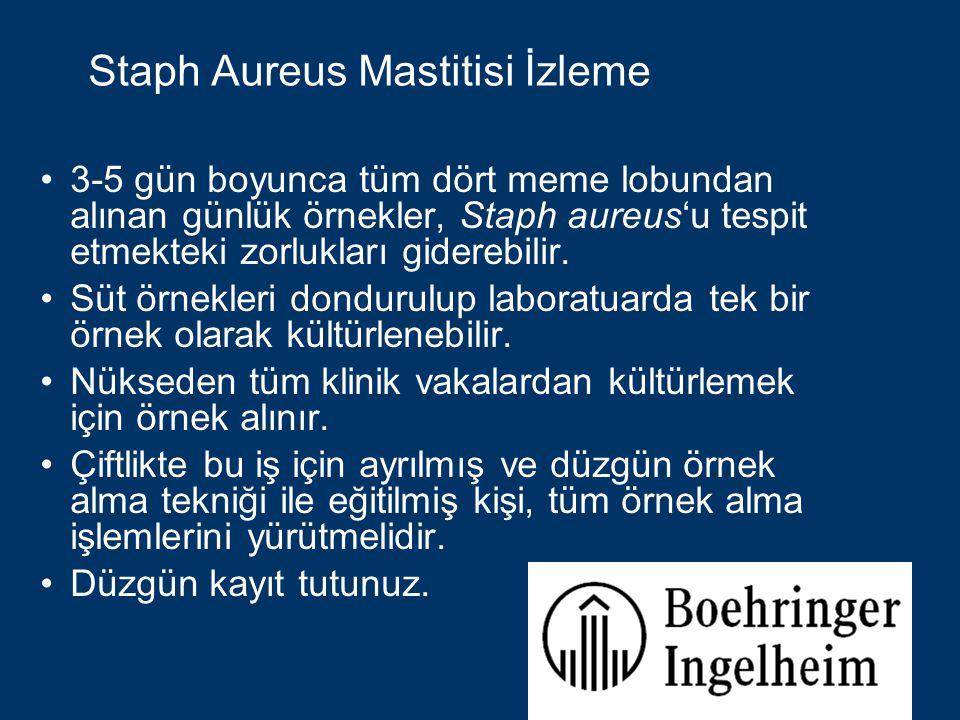 Staph Aureus Mastitisi İzleme