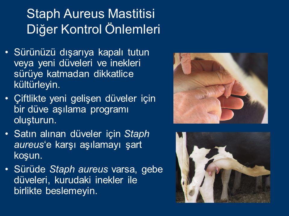 Staph Aureus Mastitisi Diğer Kontrol Önlemleri