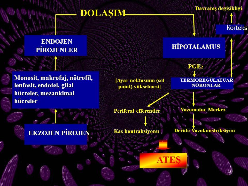 DOLAŞIM HİPOTALAMUS PİROJENLER Monosit, makrofaj, nötrofil,