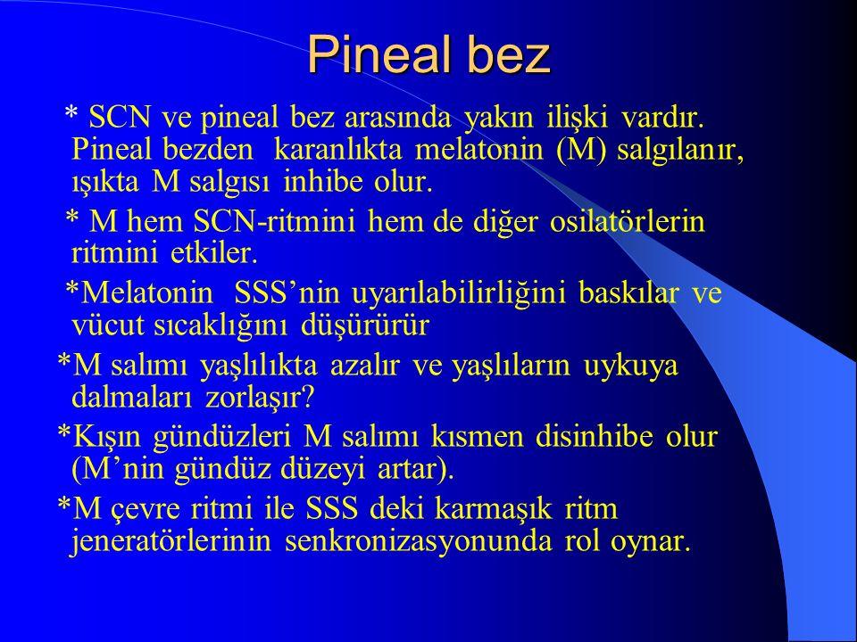 Pineal bez* SCN ve pineal bez arasında yakın ilişki vardır. Pineal bezden karanlıkta melatonin (M) salgılanır, ışıkta M salgısı inhibe olur.