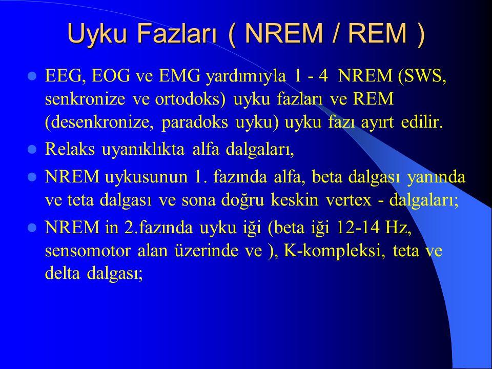 Uyku Fazları ( NREM / REM )