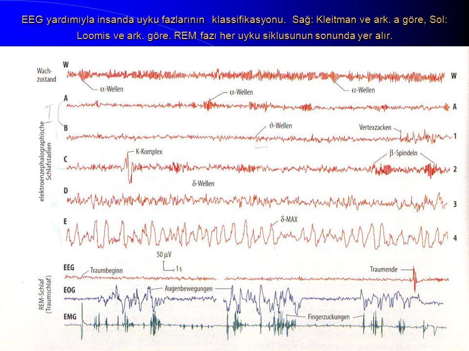 EEG yardımıyla insanda uyku fazlarının klassifikasyonu