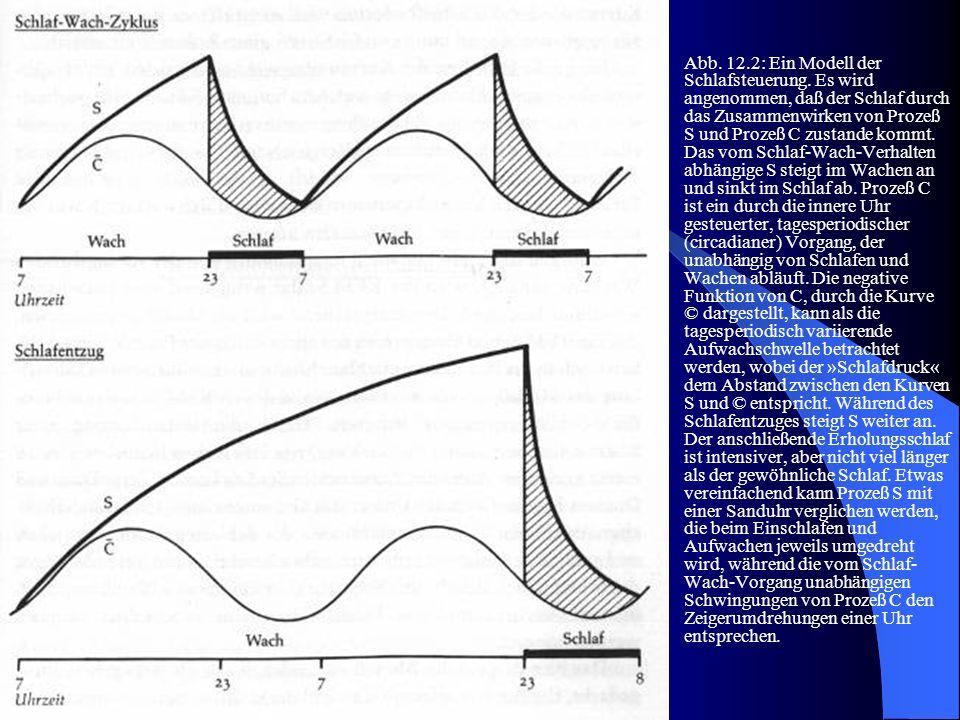 Abb. 12. 2: Ein Modell der Schlafsteuerung