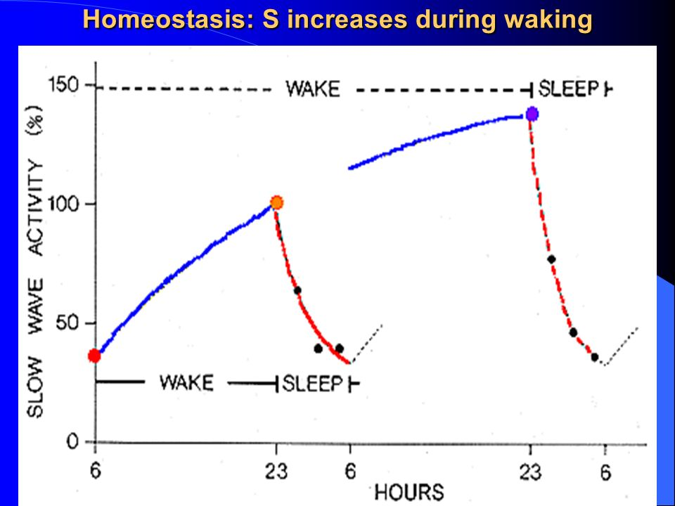 Homeostasis: S increases during waking