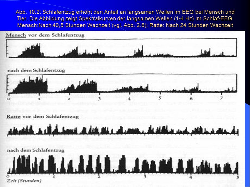 Abb. 10.2: Schlafentzug erhöht den Anteil an langsamen Wellen im EEG bei Mensch und Tier.