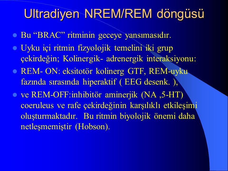 Ultradiyen NREM/REM döngüsü