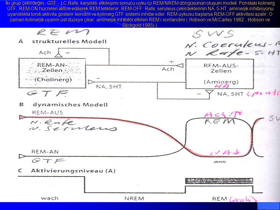 İki grup çekirdeğin, GTF - LC,Rafe, karşılıklı etkileşimi sonucu uyku içi REM/NREM döngüsünün oluşum modeli.