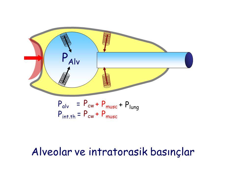 PAlv Alveolar ve intratorasik basınçlar Palv = Pcw + Pmusc + Plung