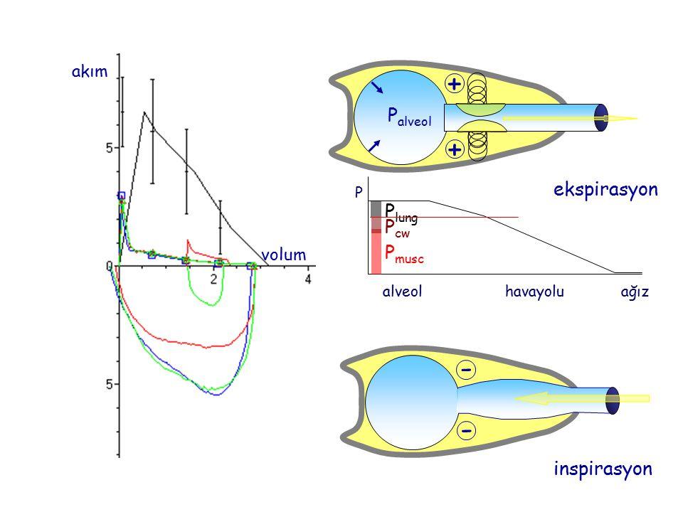 + - Palveol ekspirasyon Plung Pcw Pmusc inspirasyon akım volum alveol