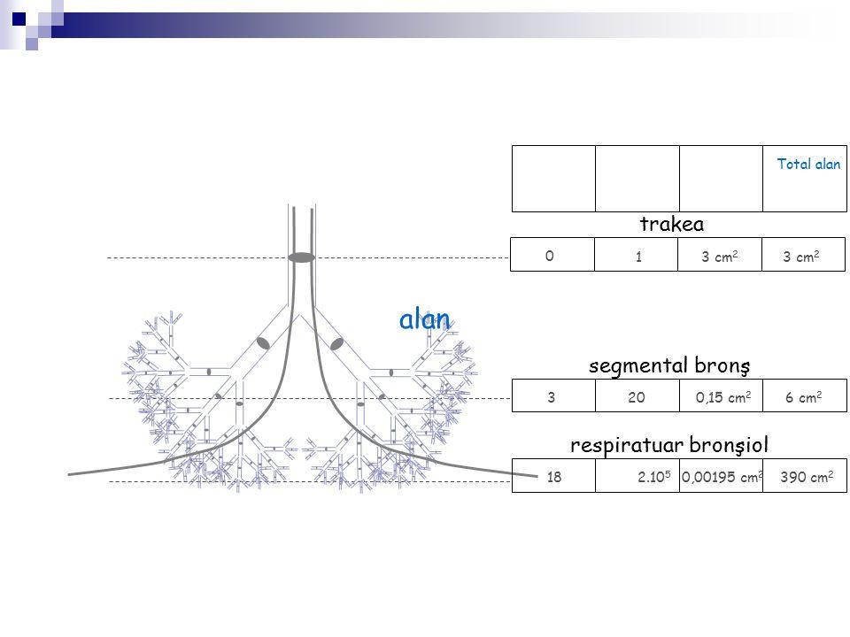 alan trakea segmental bronş respiratuar bronşiol Total alan 1 3 cm2 3