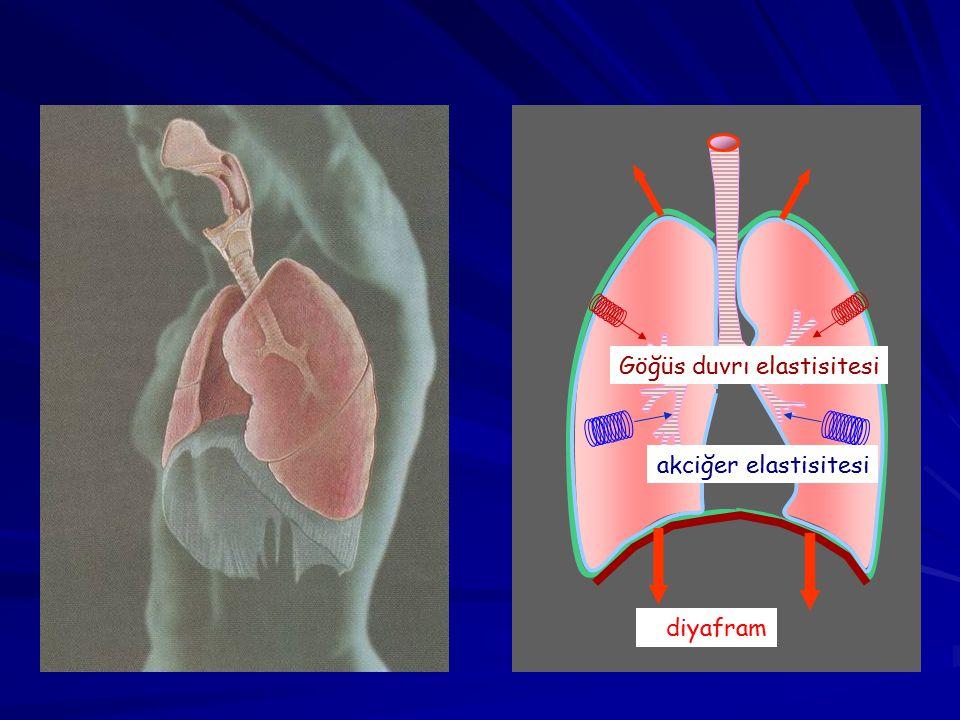 diyafram Göğüs duvrı elastisitesi akciğer elastisitesi