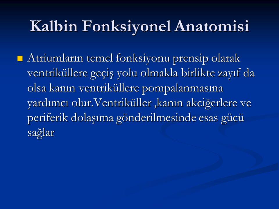 Kalbin Fonksiyonel Anatomisi