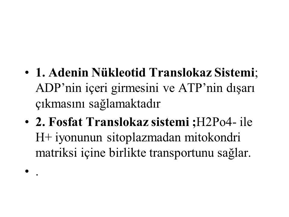 1. Adenin Nükleotid Translokaz Sistemi; ADP'nin içeri girmesini ve ATP'nin dışarı çıkmasını sağlamaktadır