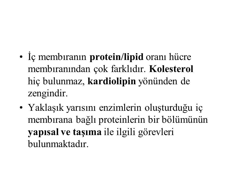 İç membıranın protein/lipid oranı hücre membıranından çok farklıdır