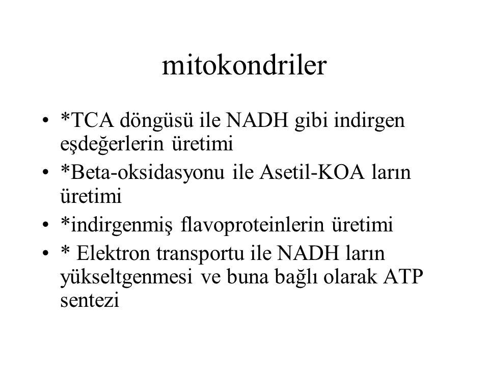 mitokondriler *TCA döngüsü ile NADH gibi indirgen eşdeğerlerin üretimi