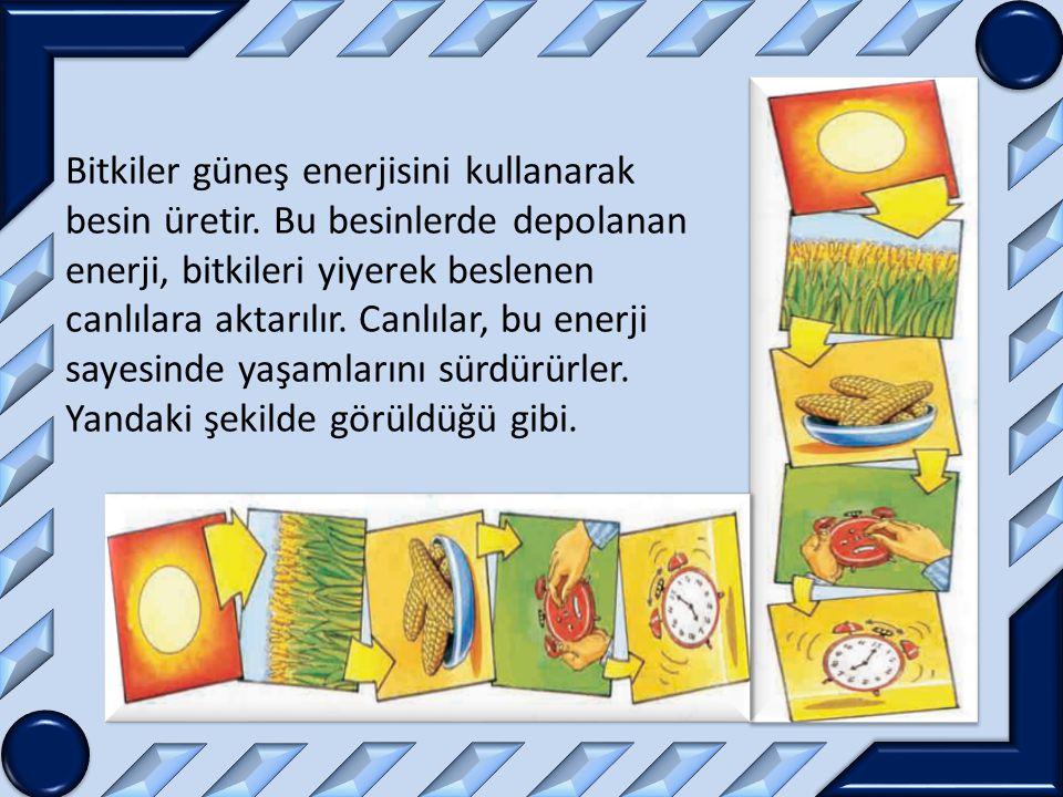 Bitkiler güneş enerjisini kullanarak besin üretir