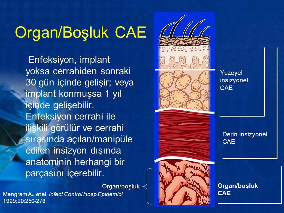 Organ/Boşluk CAE