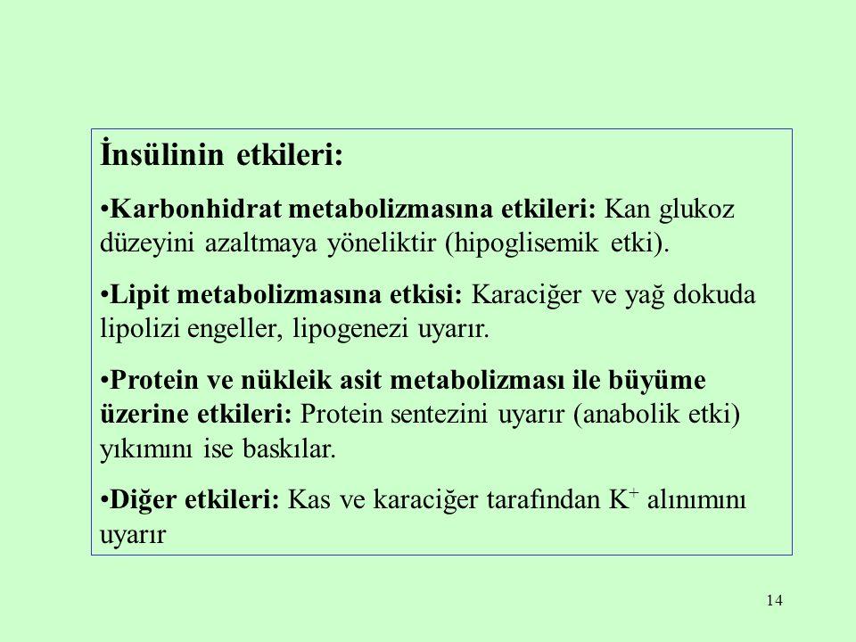 İnsülinin etkileri: Karbonhidrat metabolizmasına etkileri: Kan glukoz düzeyini azaltmaya yöneliktir (hipoglisemik etki).