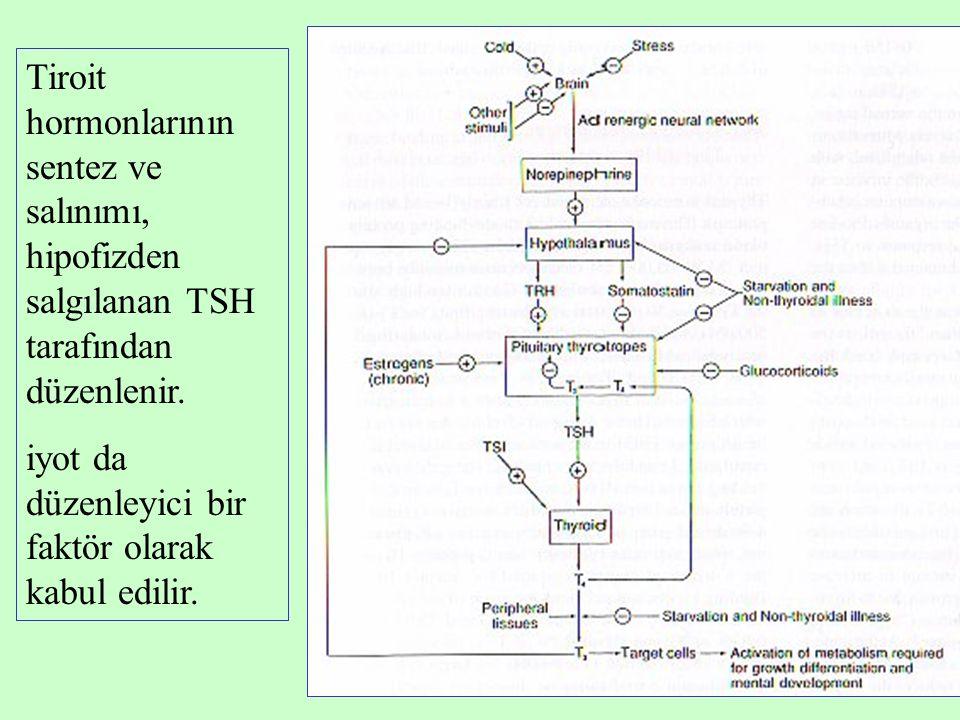 Tiroit hormonlarının sentez ve salınımı, hipofizden salgılanan TSH tarafından düzenlenir.
