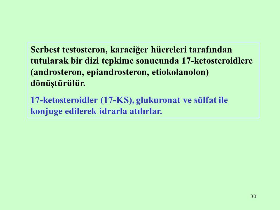 Serbest testosteron, karaciğer hücreleri tarafından tutularak bir dizi tepkime sonucunda 17-ketosteroidlere (androsteron, epiandrosteron, etiokolanolon) dönüştürülür.