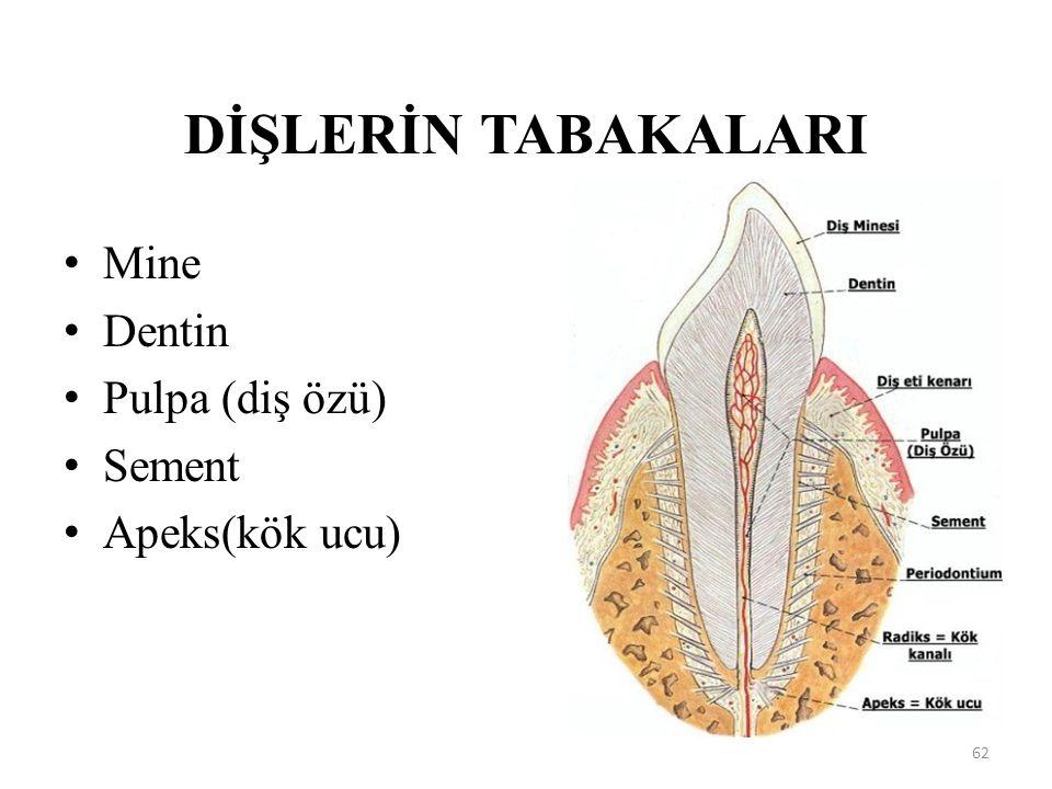 DİŞLERİN TABAKALARI Mine Dentin Pulpa (diş özü) Sement Apeks(kök ucu)