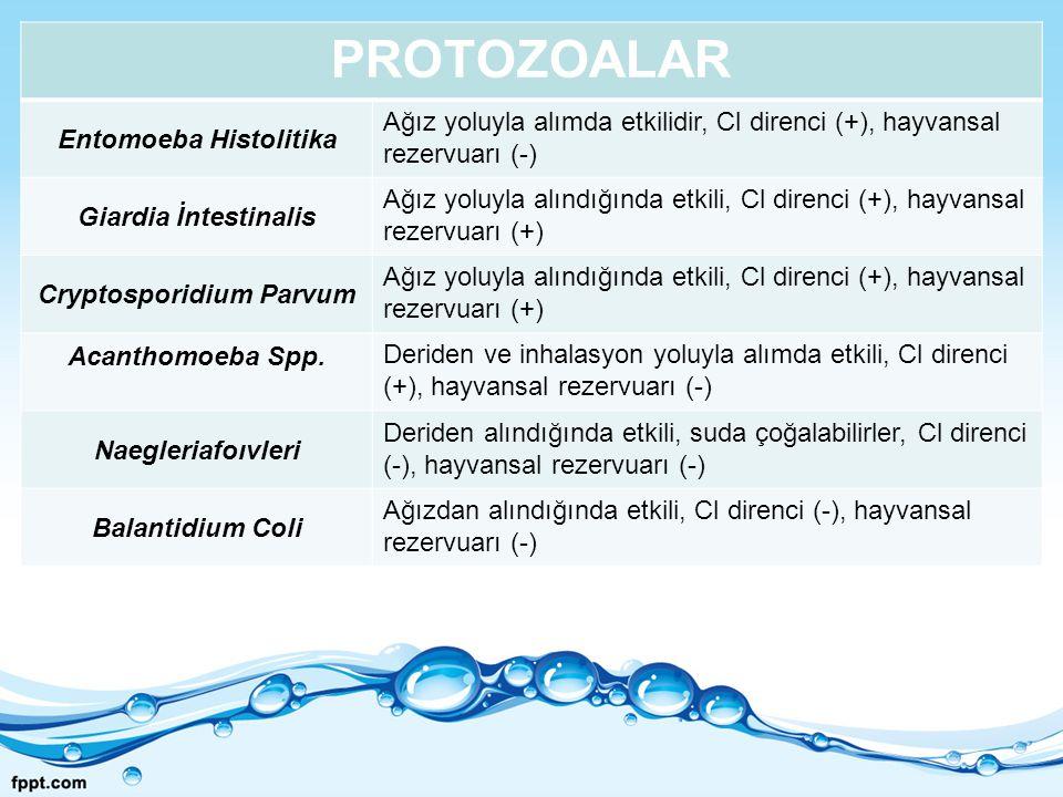 Entomoeba Histolitika Cryptosporidium Parvum