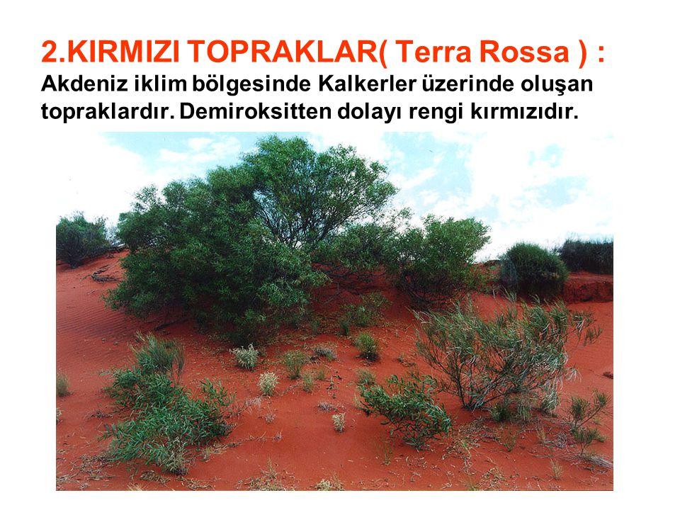 2.KIRMIZI TOPRAKLAR( Terra Rossa ) : Akdeniz iklim bölgesinde Kalkerler üzerinde oluşan topraklardır.