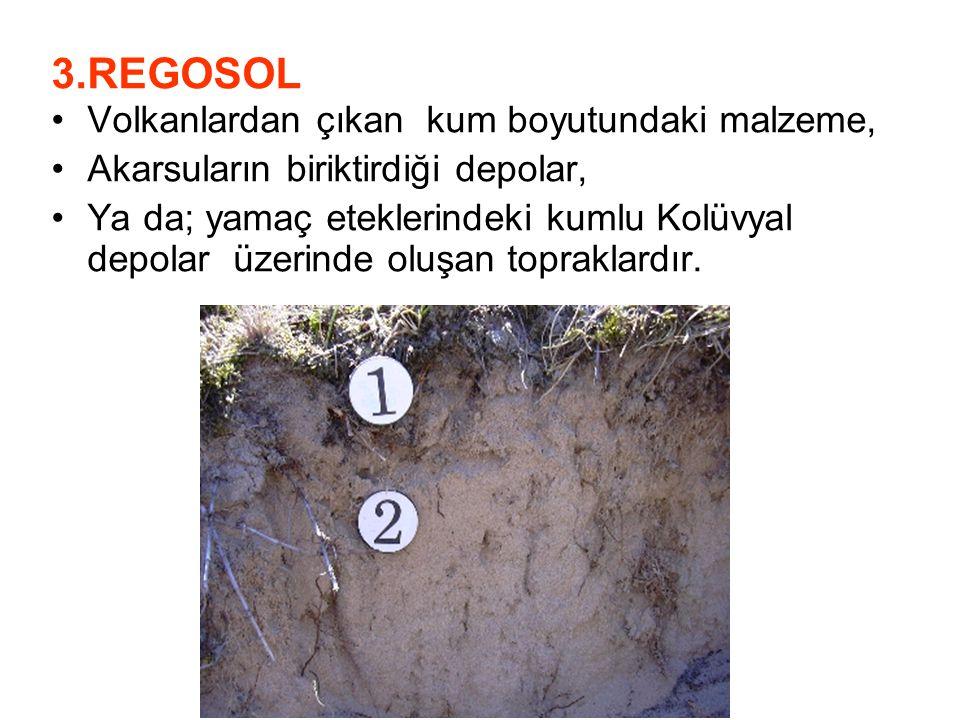 3.REGOSOL Volkanlardan çıkan kum boyutundaki malzeme,