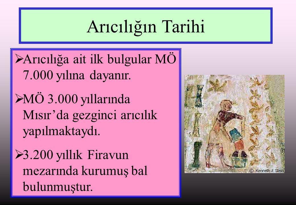 Arıcılığın Tarihi Arıcılığa ait ilk bulgular MÖ 7.000 yılına dayanır.