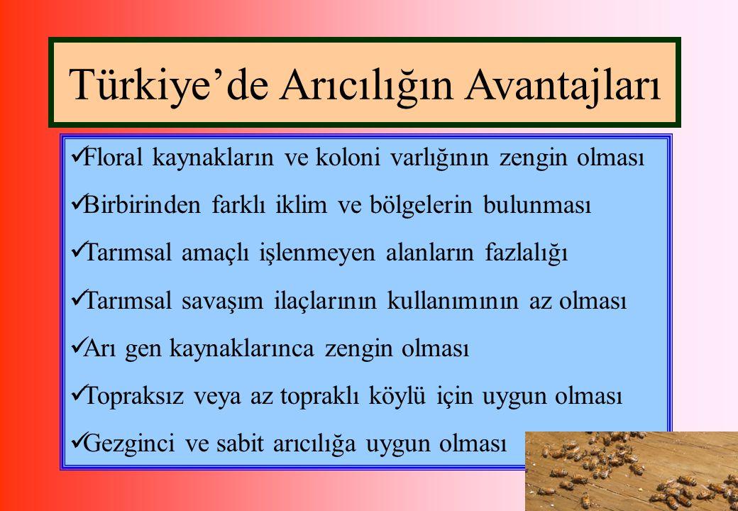 Türkiye'de Arıcılığın Avantajları