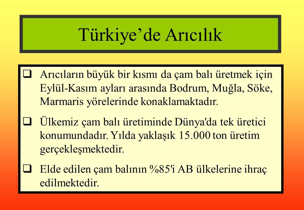 Türkiye'de Arıcılık