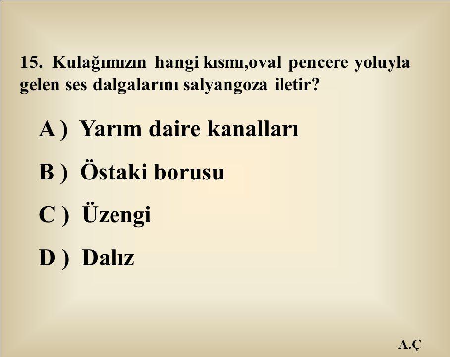 A ) Yarım daire kanalları B ) Östaki borusu C ) Üzengi D ) Dalız