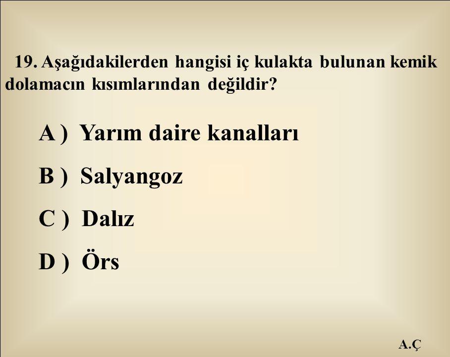 A ) Yarım daire kanalları B ) Salyangoz C ) Dalız D ) Örs