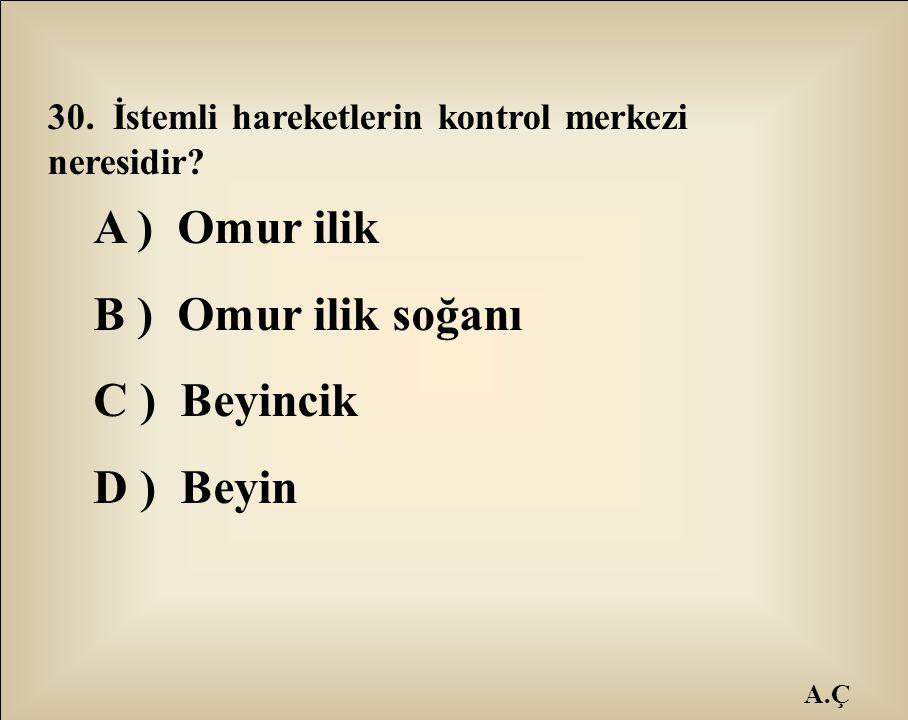 A ) Omur ilik B ) Omur ilik soğanı C ) Beyincik D ) Beyin