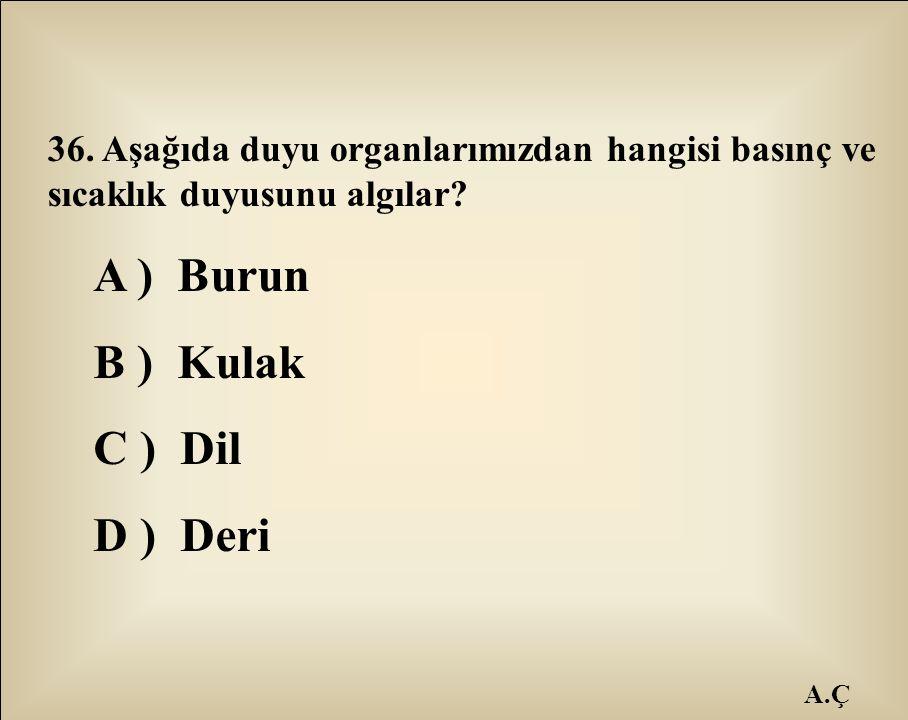 A ) Burun B ) Kulak C ) Dil D ) Deri