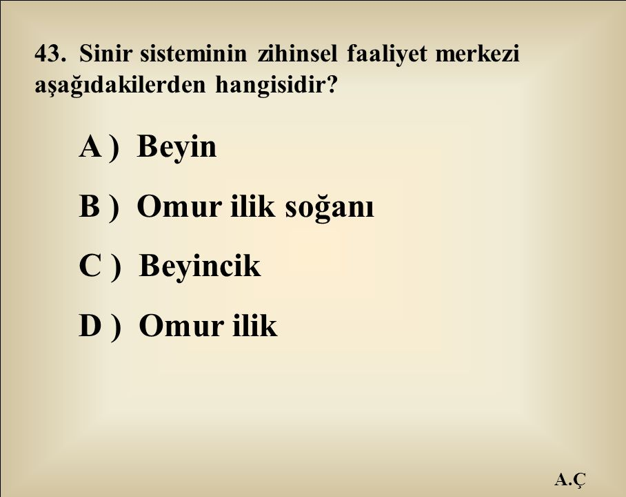 A ) Beyin B ) Omur ilik soğanı C ) Beyincik D ) Omur ilik