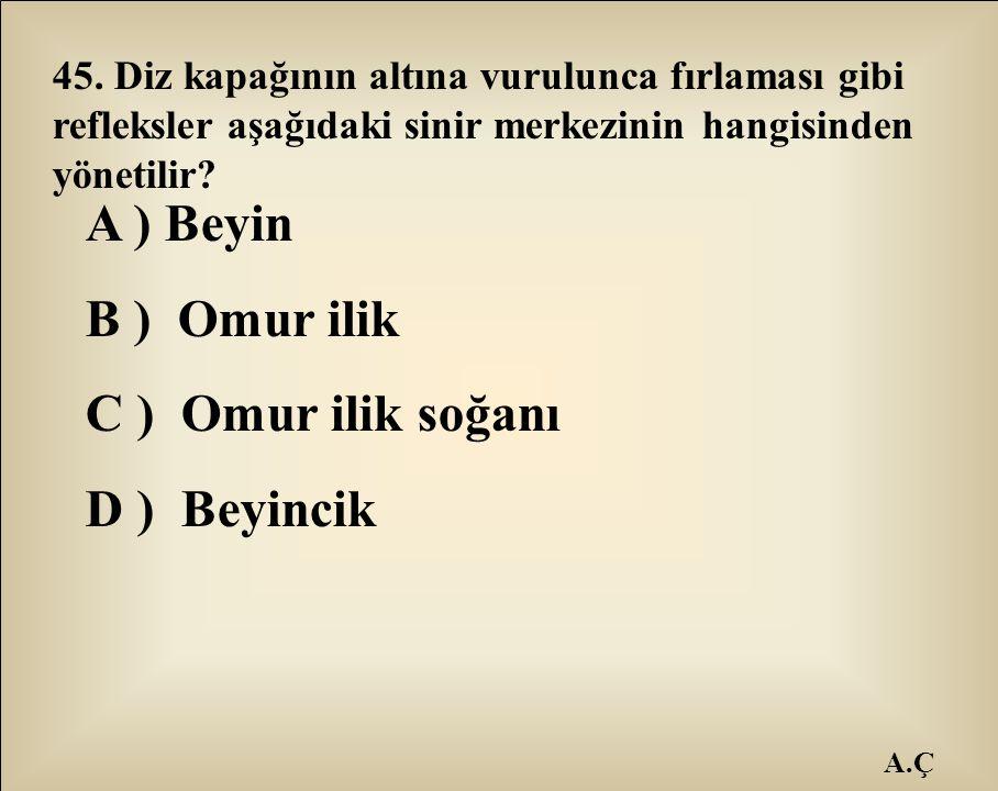 A ) Beyin B ) Omur ilik C ) Omur ilik soğanı D ) Beyincik
