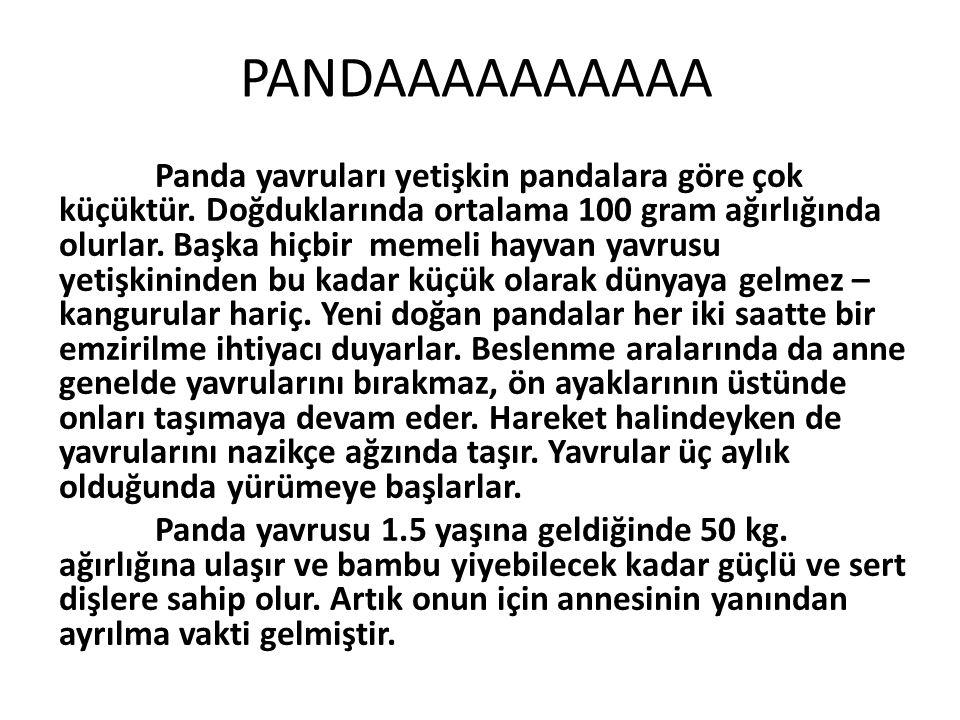 PANDAAAAAAAAAA