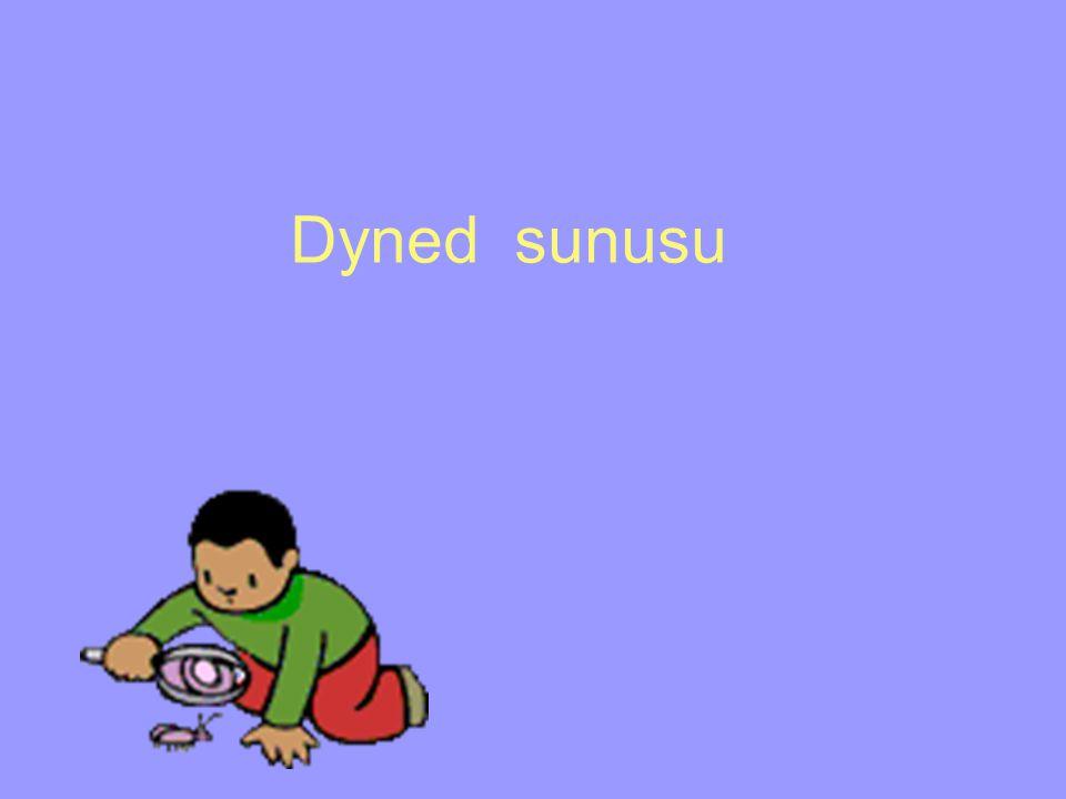 Dyned sunusu